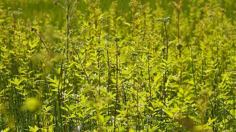 Summer Field Beauty Scene 02 Stock Video Footage