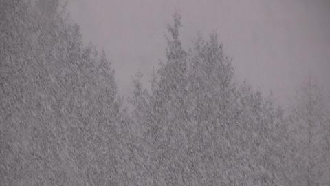 Winter Stock Video Footage