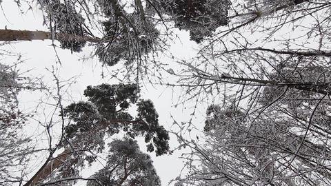 Winter landscapes 16 Footage