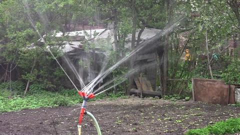 Installation of irrigation in vegetable garden 03 Footage