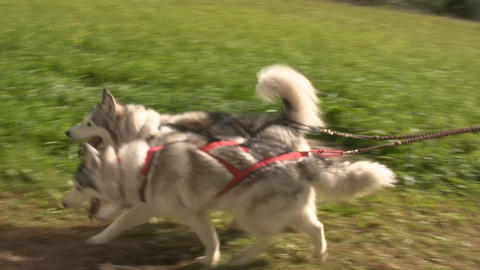 Dog sledding 3 Stock Video Footage