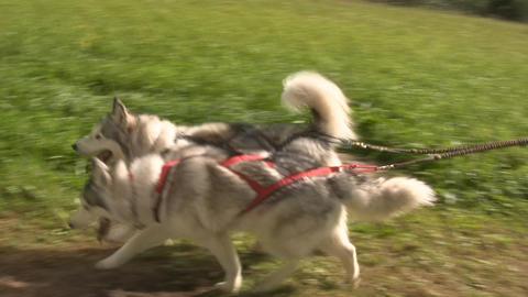 Dog sledding 3 Stock Video Footage