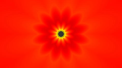 Red flower (pattern) Stock Video Footage