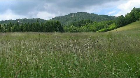Pasture Stock Video Footage