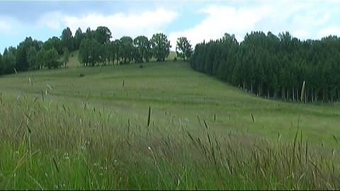 Pasture Stock Video Footage