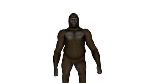 Gorilla Stock Video Footage