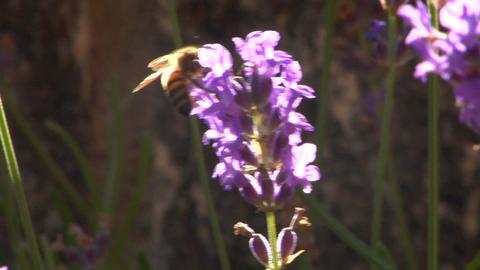 Bee 105 Footage