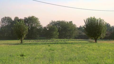bird flock 08 Stock Video Footage