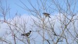 crow 02 Footage