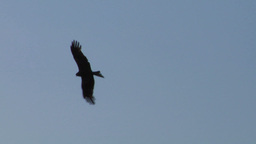 hawk fly 10 Stock Video Footage