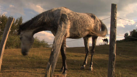 horses 02 Stock Video Footage