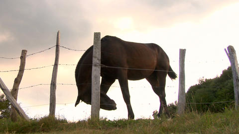 horses 04 Stock Video Footage
