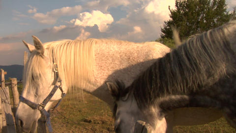 horses 06 Stock Video Footage