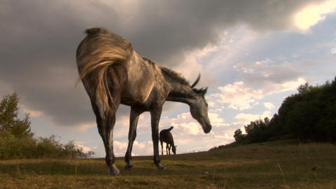 horses 08 Stock Video Footage