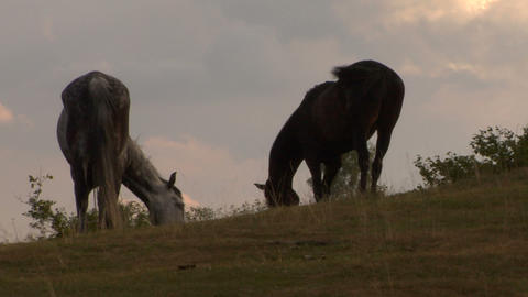 horses 10 Stock Video Footage