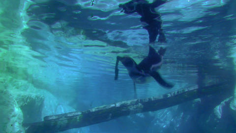 penguin 03 Stock Video Footage