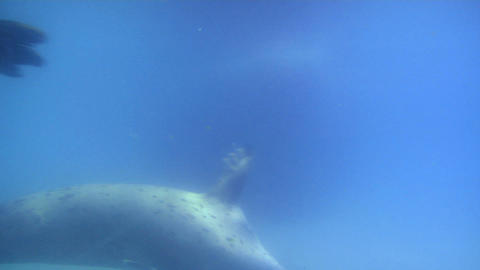 seal 02 Stock Video Footage