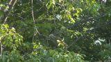 squirrel 02 Footage