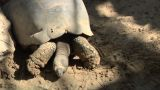 Tortoise 01 stock footage