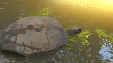 tortoise 05 Stock Video Footage
