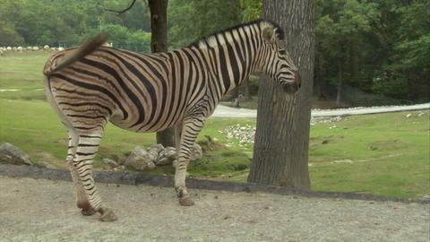 zebra 02 Live Action