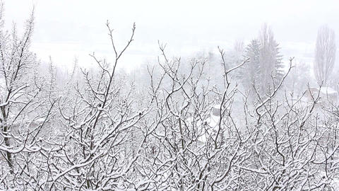 Trees in Snow 18 Stock Video Footage