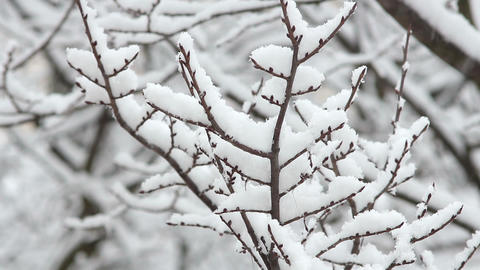 Trees in Snow 20 Stock Video Footage