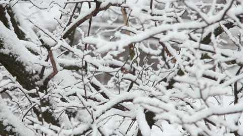 Trees in Snow 22 Stock Video Footage