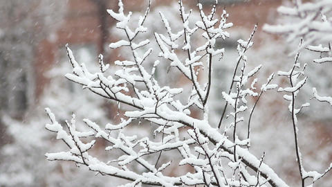 Trees in Snow 24 Stock Video Footage