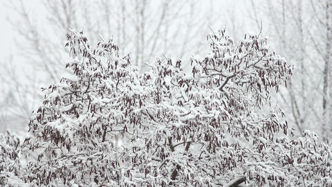 Trees in Snow 26 Stock Video Footage