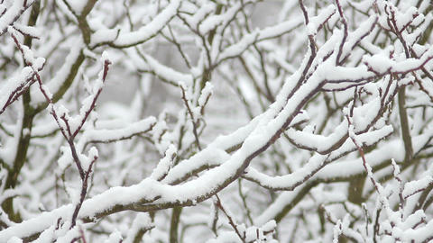 Trees in Snow 28 Stock Video Footage