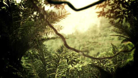 Jungle / Rainforest Animation