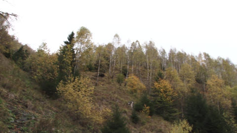 Autumn landscape in the forest 07 Footage