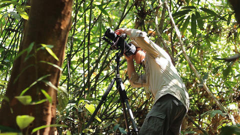 Wildlife Photographer taking picture of bird in the rainforest jungle Footage