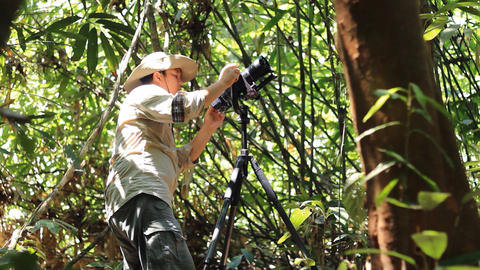 Wildlife Photographer taking picture of bird in the rainforest jungle Live Action