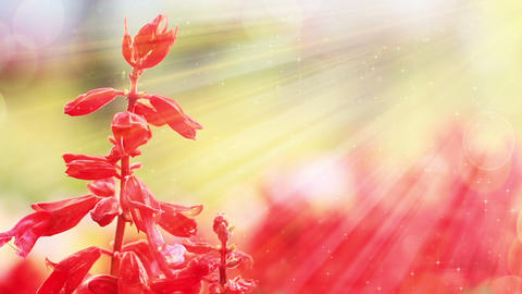 Red Flowers And Sunlight Slowmotion Seamless Loop stock footage