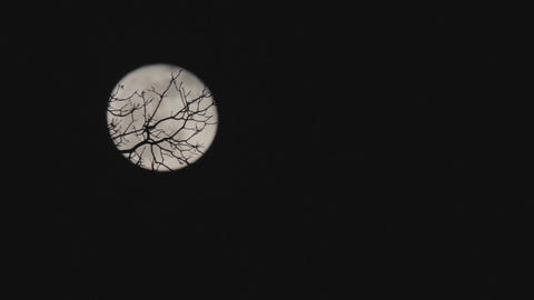 Moon through the trees 3 Footage
