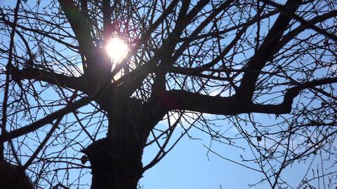 Sun Light Through Tree Branch. 4k Ultra HD Footage