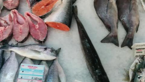 Fish Market Live Action