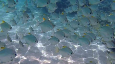Beautiful Fish Underwater Footage