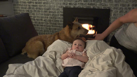 Mom Baby and Dog Live Action