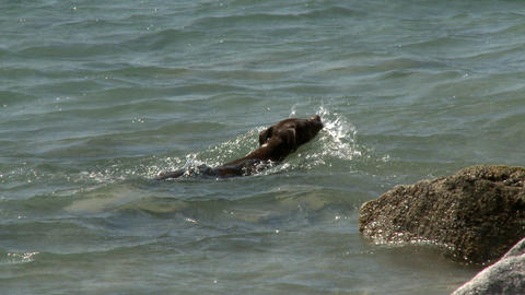 Dog Playing In The Water stock footage