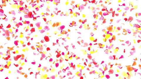 Flower petals pink falling A 4 K CG動画