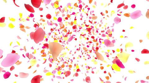 Flower petals pink front Aw 4 K Animation