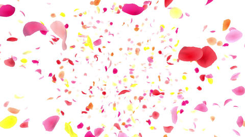Flower petals pink front Dw 4 K Animation
