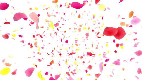 Flower petals pink front Dw 4 K CG動画