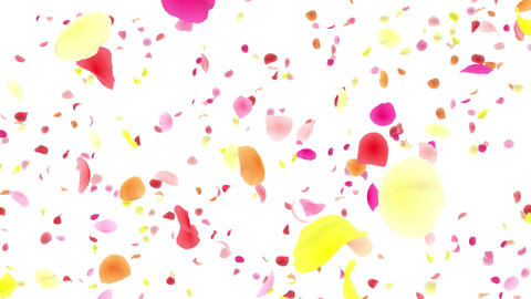 Flower petals pink tornado Aw 4 K Animation