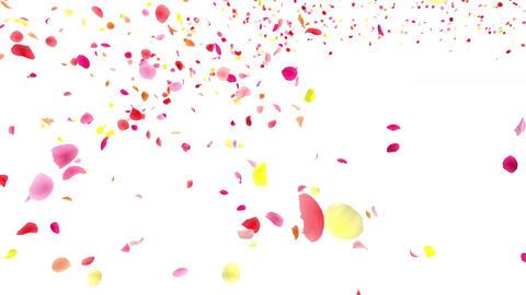Flower petals pink tornado Ja 4 K Animation