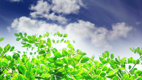 green leaves and clouds Footage