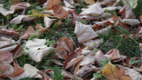 Autumn Leaves And Grass stock footage
